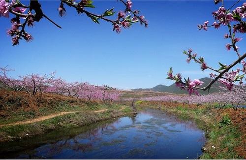 在那桃花盛开的地方简谱